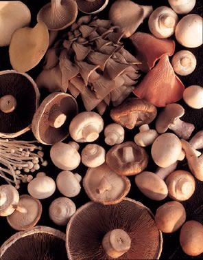 mushroom growing supplements