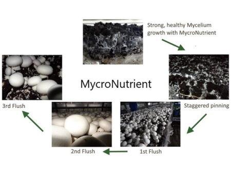 MycroNutrient